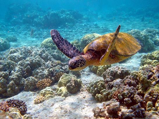Islas Galapagos - Tortuga